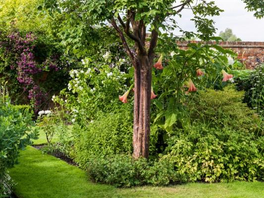 wpid12294-Stuart-Cottage-in-August-GSTU005-nicola-stocken.jpg
