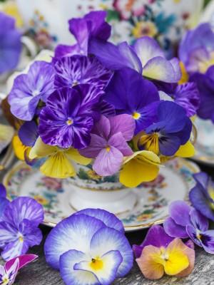 wpid12836-Plant-Profile-Perennial-Violas-GVIO056-nicola-stocken.jpg