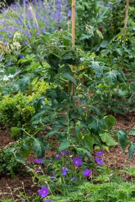 wpid13324-A-Family-Town-Garden-GGLN045-nicola-stocken.jpg