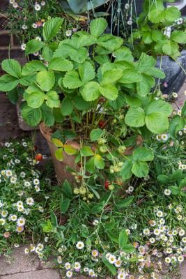 wpid13326-A-Family-Town-Garden-GGLN046-nicola-stocken.jpg