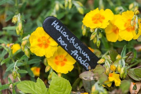 wpid13328-A-Family-Town-Garden-GGLN047-nicola-stocken.jpg