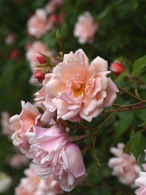 wpid13789-Town-Place-in-July-ROSE324-nicola-stocken.jpg