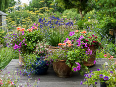 Thumbnail image for Top Ten Summer Container Ideas