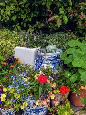 wpid14002-Top-Ten-Summer-Container-Ideas-GRED017-nicola-stocken.jpg