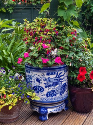 wpid14004-Top-Ten-Summer-Container-Ideas-GRED021-nicola-stocken.jpg