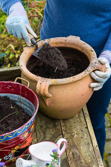 Thumbnail image for Planting a Spring Pot Step-by-Step
