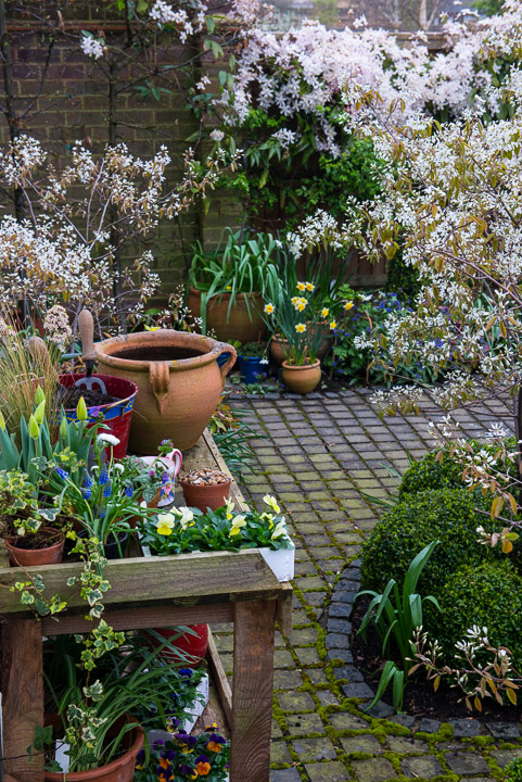 Planting a spring pot step by step - Planting grapevine in springtime steps ...