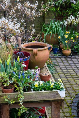 wpid14043-Planting-a-Spring-Pot-Step-by-Step-QCON002-nicola-stocken.jpg