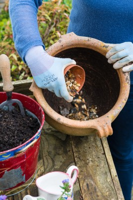 wpid14049-Planting-a-Spring-Pot-Step-by-Step-QCON005-nicola-stocken.jpg