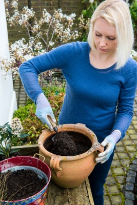 wpid14053-Planting-a-Spring-Pot-Step-by-Step-QCON007-nicola-stocken.jpg