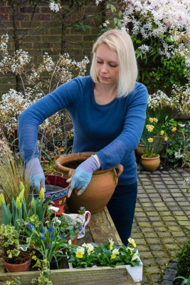 wpid14057-Planting-a-Spring-Pot-Step-by-Step-QCON009-nicola-stocken.jpg