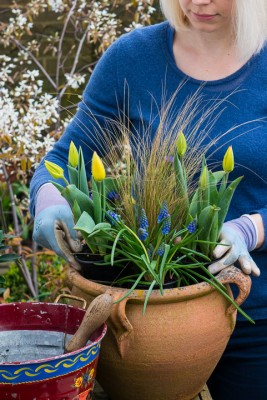 wpid14069-Planting-a-Spring-Pot-Step-by-Step-QCON014-nicola-stocken.jpg