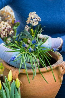 wpid14089-Planting-a-Spring-Pot-Step-by-Step-QCON024-nicola-stocken.jpg