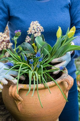 wpid14091-Planting-a-Spring-Pot-Step-by-Step-QCON025-nicola-stocken.jpg