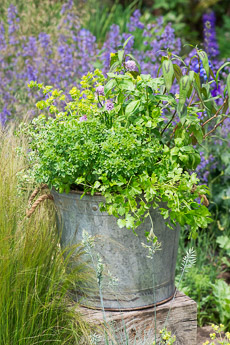 Thumbnail image for Plant A Herb Container for Summer