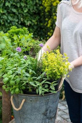 wpid14142-Plant-A-Herb-Container-for-Summer-QCON049-nicola-stocken.jpg