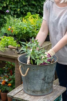 wpid14152-Plant-A-Herb-Container-for-Summer-QCON054-nicola-stocken.jpg