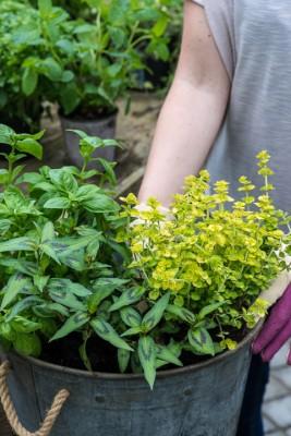 wpid14166-Plant-A-Herb-Container-for-Summer-QCON061-nicola-stocken.jpg