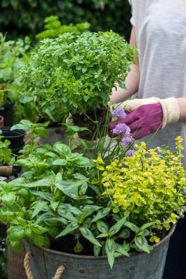 wpid14180-Plant-A-Herb-Container-for-Summer-QCON068-nicola-stocken.jpg