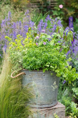 wpid14202-Plant-A-Herb-Container-for-Summer-QCON079-nicola-stocken.jpg