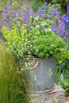 wpid14204-Plant-A-Herb-Container-for-Summer-QCON080-nicola-stocken.jpg