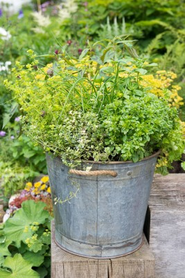 wpid14208-Plant-A-Herb-Container-for-Summer-QCON082-nicola-stocken.jpg