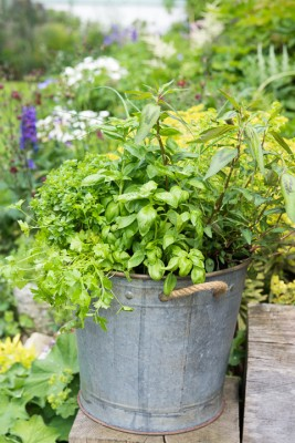 wpid14210-Plant-A-Herb-Container-for-Summer-QCON083-nicola-stocken.jpg