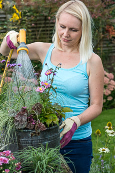 Thumbnail image for Step-by-Step Planting a Summer Pot