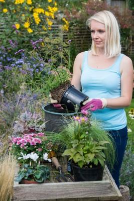 wpid14227-Step-by-Step-Planting-a-Summer-Pot-QCON088-nicola-stocken.jpg
