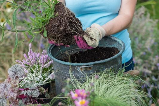 wpid14229-Step-by-Step-Planting-a-Summer-Pot-QCON089-nicola-stocken.jpg