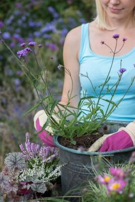 wpid14231-Step-by-Step-Planting-a-Summer-Pot-QCON090-nicola-stocken.jpg