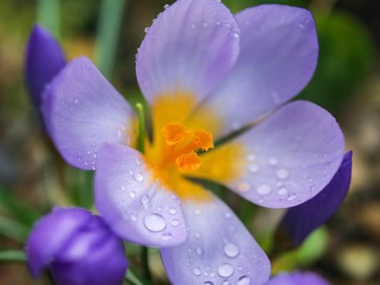 wpid14363-Photographing-Gardens-BCRO025-nicola-stocken.jpg