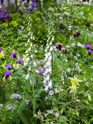 wpid14369-Photographing-Gardens-DESI102-nicola-stocken.jpg