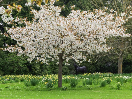wpid14407-Photographing-Gardens-GINH019-nicola-stocken.jpg
