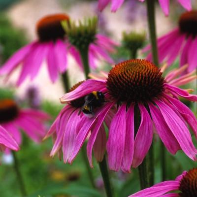 wpid14435-Photographing-Gardens-PECH047-nicola-stocken.jpg