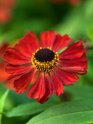 wpid14437-Photographing-Gardens-PHEE018-nicola-stocken.jpg