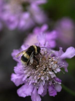 wpid14443-Photographing-Gardens-PSCA013-nicola-stocken.jpg