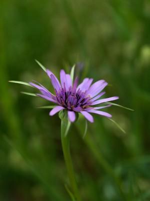 wpid14451-Photographing-Gardens-XTRA002-nicola-stocken.jpg