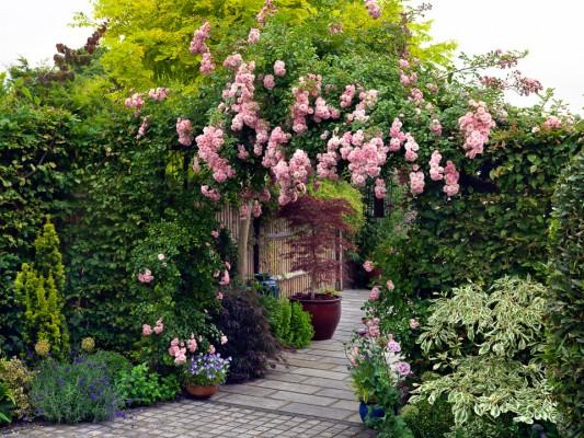 wpid14499-Romancing-The-Rose-GOCK126-nicola-stocken.jpg
