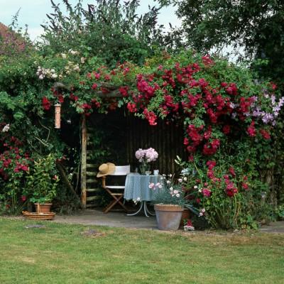 wpid14505-Romancing-The-Rose-GROS060-nicola-stocken.jpg