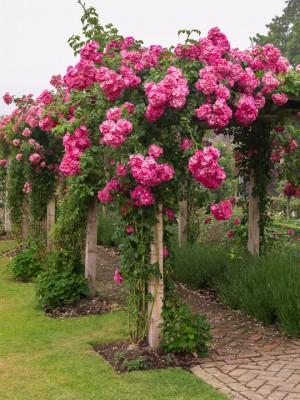 wpid14513-Romancing-The-Rose-GTOW037-nicola-stocken.jpg