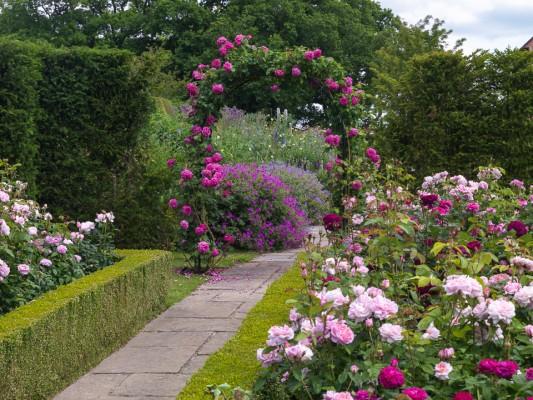 wpid14515-Romancing-The-Rose-GTOW040-nicola-stocken.jpg