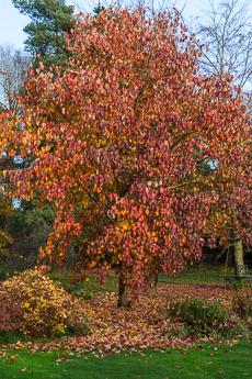 Thumbnail image for Wood Barton Garden in November