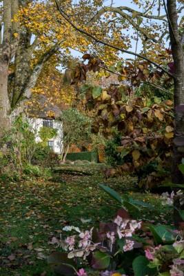 wpid14634-WoodBarton-Garden-in-November-GWOA004-nicola-stocken.jpg