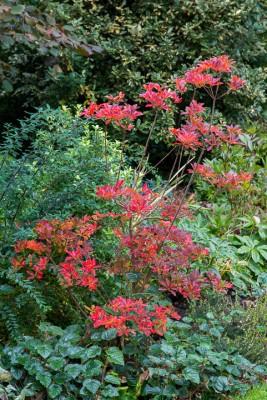 wpid14638-WoodBarton-Garden-in-November-GWOA006-nicola-stocken.jpg