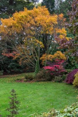 wpid14642-WoodBarton-Garden-in-November-GWOA008-nicola-stocken.jpg