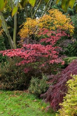 wpid14644-WoodBarton-Garden-in-November-GWOA009-nicola-stocken.jpg