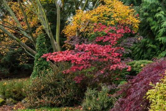 wpid14646-WoodBarton-Garden-in-November-GWOA010-nicola-stocken.jpg