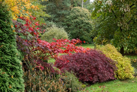wpid14648-WoodBarton-Garden-in-November-GWOA011-nicola-stocken.jpg