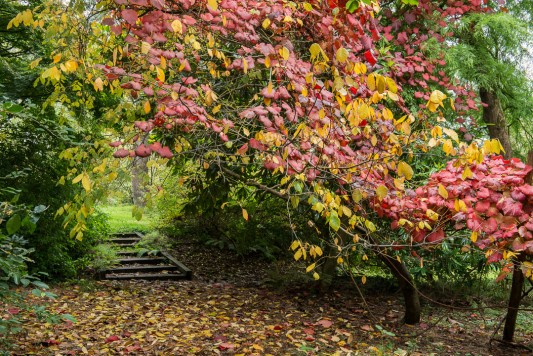 wpid14650-WoodBarton-Garden-in-November-GWOA012-nicola-stocken.jpg